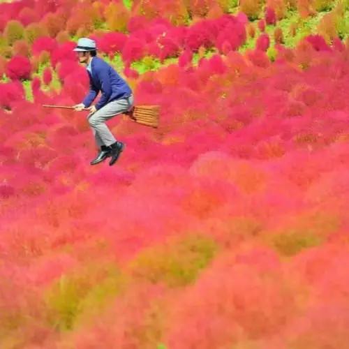 """《骑着扫帚和""""哈利波特""""一起环游日本》"""
