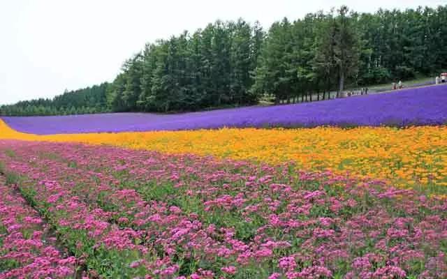 《带你周游北海道》