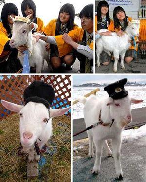 《日本7位神奇的动物站长的故事》