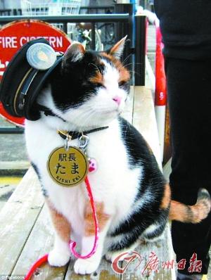 """《日本火车站""""猫站长""""退休》"""