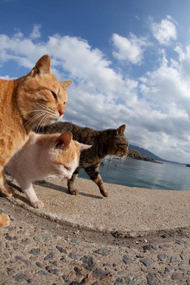 《摄影师Fubirai 用时5年,拍摄日本福冈喵星人领地。》