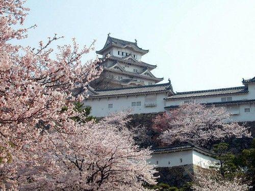 《🌸日本关西玩樱名所全攻略🌸》