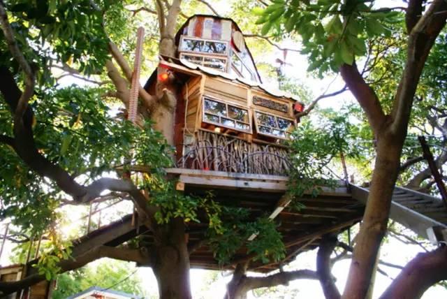 《爬进树屋喝杯咖啡》