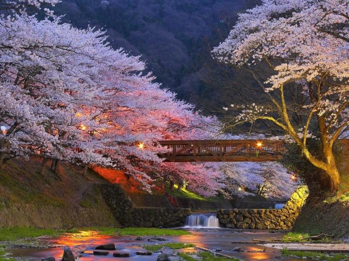 《日本的行政区划-东京都(とうきょうと)》