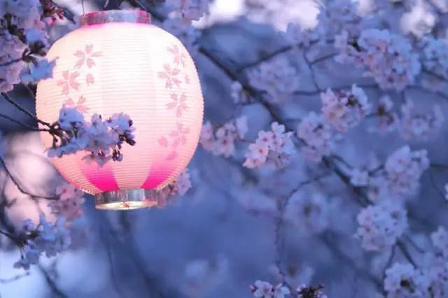 《2016最全赏樱攻略新鲜出炉啦!不要错过。》