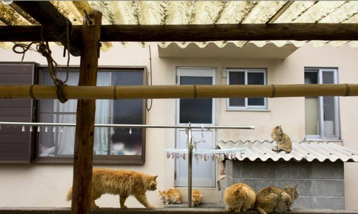 《猫奴必去 日本最具人气的9座猫岛》