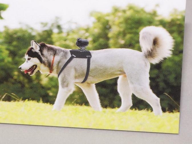 《索尼在日本推出犬用运动相机支架》