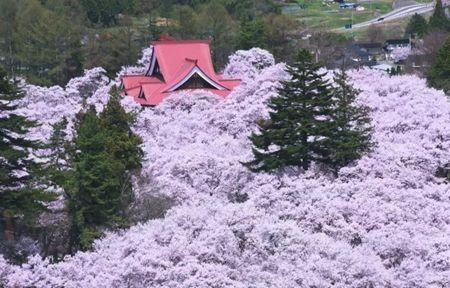 《全日本赏樱指南又来了 今年有些不一样》