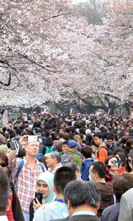 《日本迎来最佳赏樱期 多地高温破史上纪录》