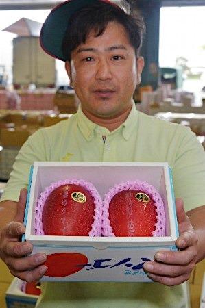 """《日本""""太阳之子""""芒果拍出1.2万元人民币天价》"""