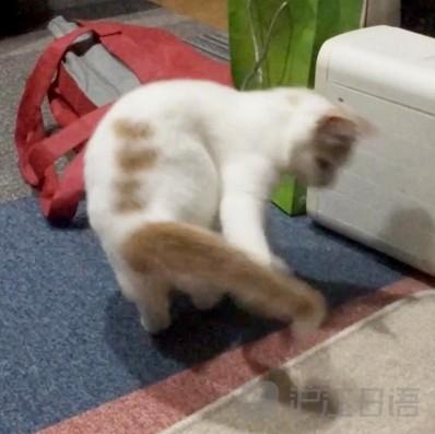 《你猜:宠物追着尾巴转圈的原因?》
