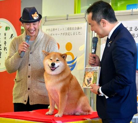 《日本网红柴犬人气高 当地旅游大使获政要接见》