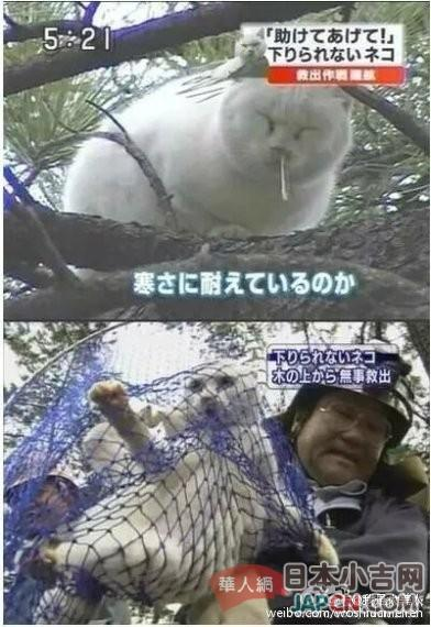 《日本有一只流氓喵坐在树上,往行人头上擤鼻涕,被逮捕!》