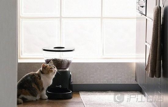 《找回天性:爱猫就让它像猫一样生活》