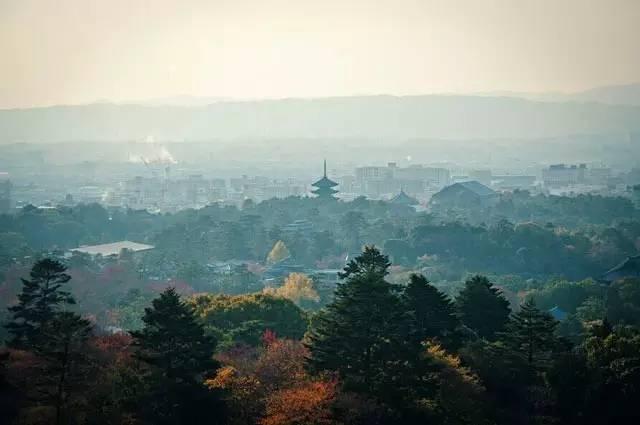 《为什么说这辈子必须去一次奈良?》