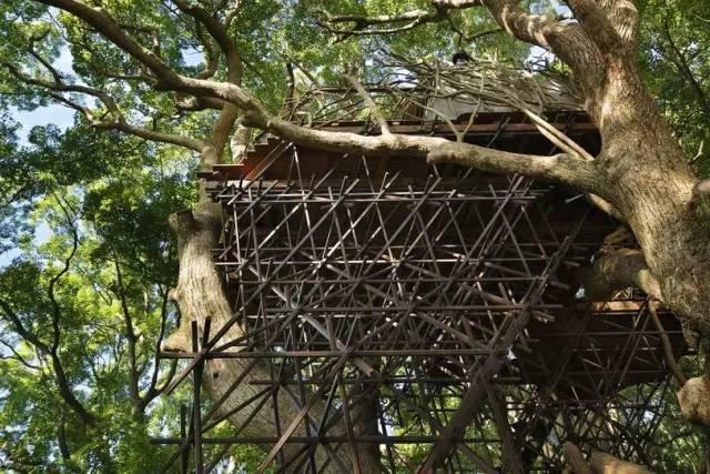 《日本最大树屋「热海鸟居」,兼具诗意和惬意的品茶屋》