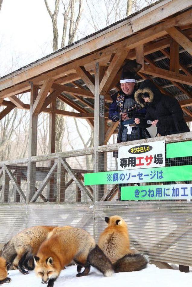 """《拜见""""狐仙儿"""",来日本宫城县的藏王狐狸村。》"""