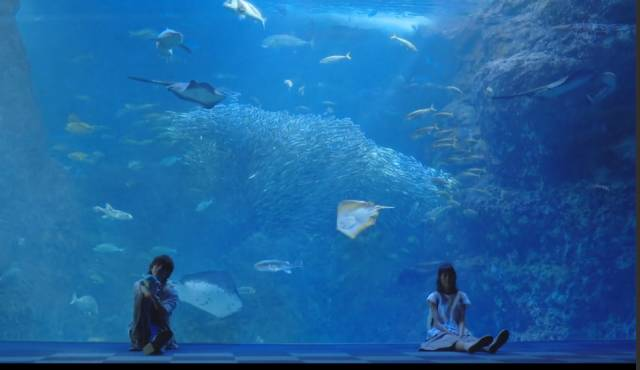 《日本这些水族馆不会让你失望!》