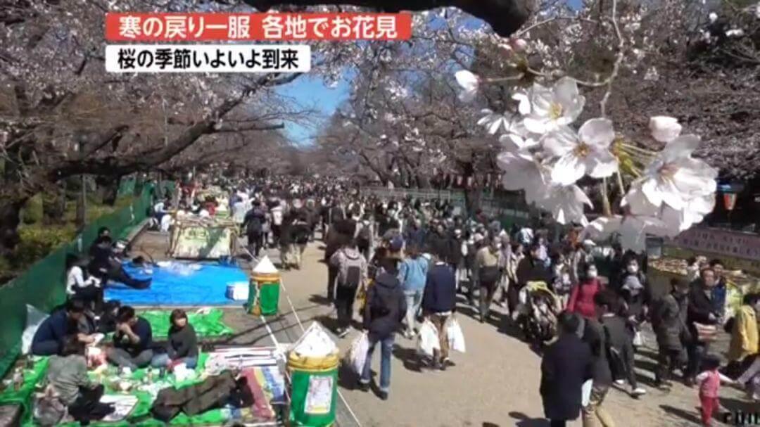《速报!日本东京的樱花已开,预计会有100万游客去日本赏樱。》